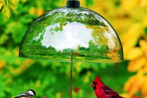 Bowl & Platform Bird Feeders