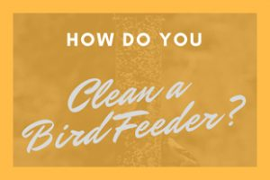 How Do You Clean a Bird Feeder?