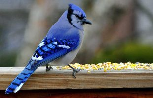 5 Fall Bird Feeding Tips