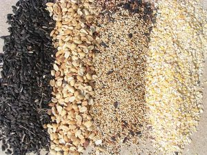 Multiple Types of Bird Seed